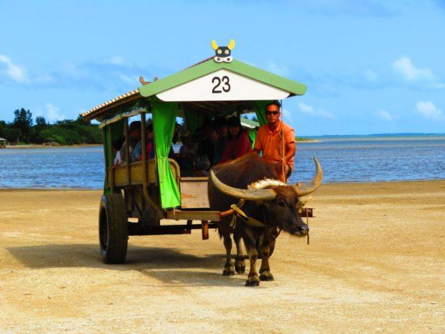 西表島 由布島 水牛車 写真