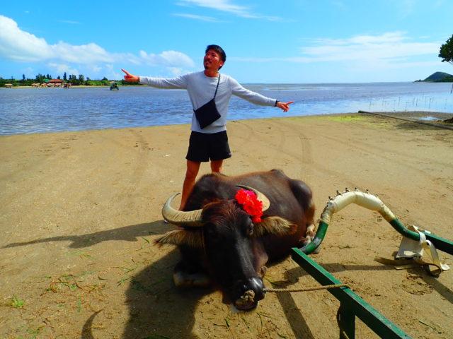 由布島 水牛と一緒に 写真