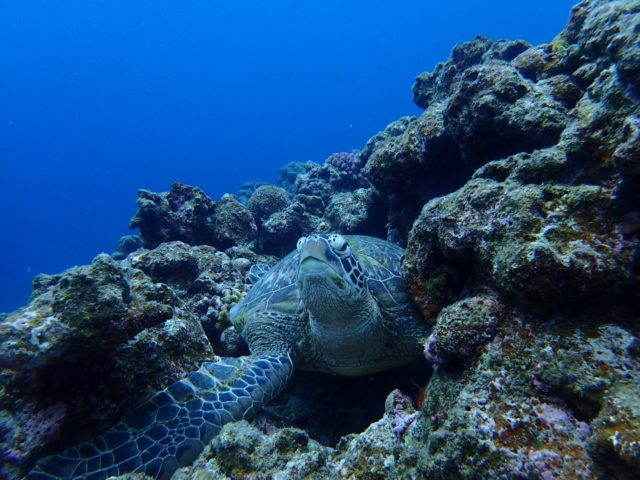 西表島の海とウミガメ