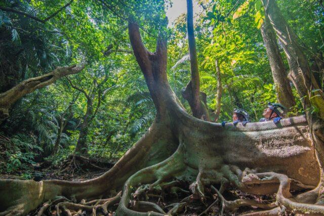 西表島 ジャングル
