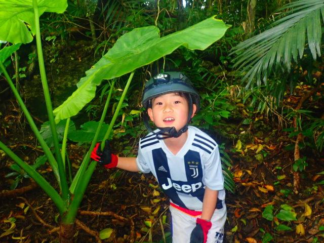 西表島鍾乳洞探検(ケイビング)にて、クワズイモと少年