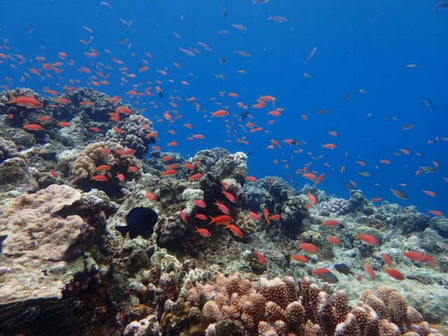 熱帯魚の大群