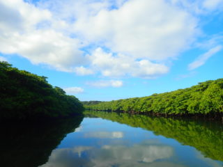 沖縄最大の落差!西表島のシンボル「ピナイサーラの滝」を目指すカヌーツアー