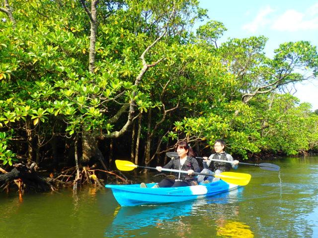 夫婦で西表島のマングローブカヌーに挑戦