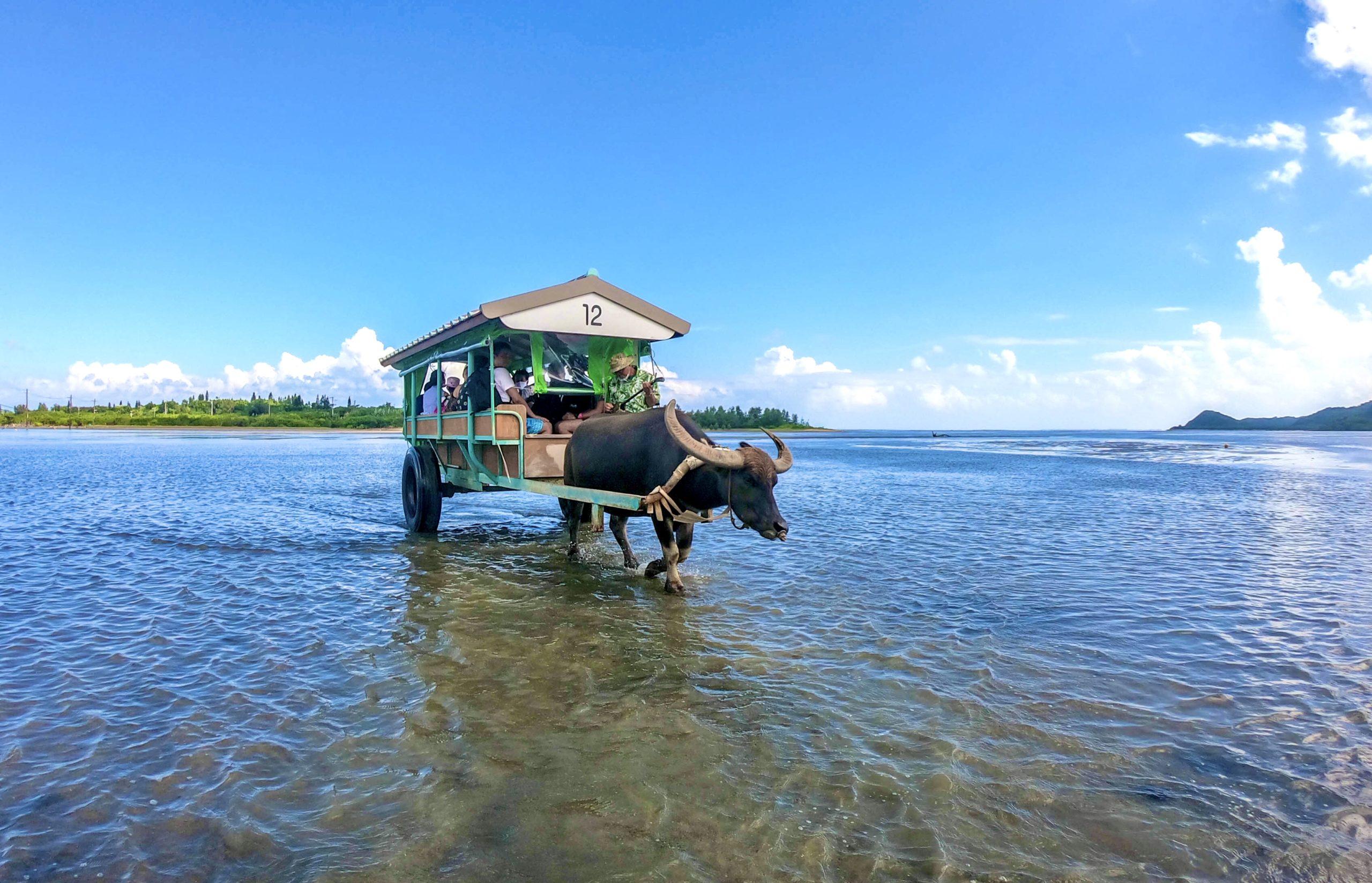 観光とアクティビティがお得なセットに!由布島観光&マングローブSUPorカヌー