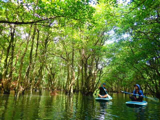 西表島のマングローブ川