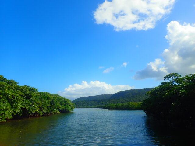 マングローブ川