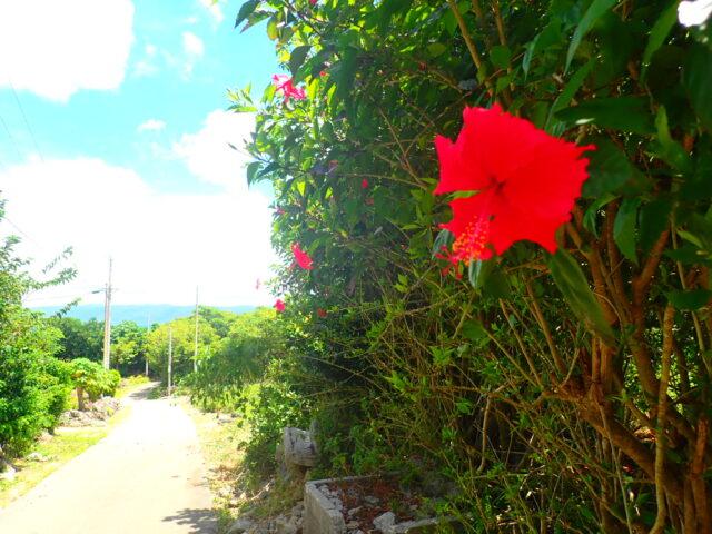 鳩間島の花