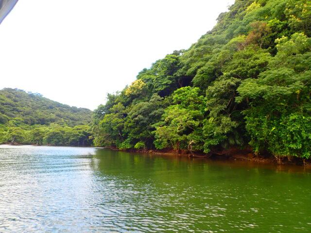 イリオモテヤマネコのジャングル